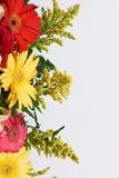 Colourful kwiatu intern obrazy royalty free