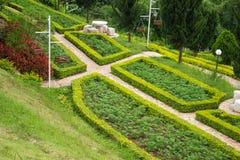 Colourful kwiaty w ogródzie, Tajlandia obraz royalty free