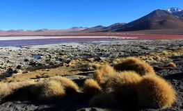 The colourful Laguna Colorada, Salar de Uyuni, Bolivia stock photo