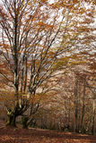 Colourful landscape in autumn. Read leafs in autumn falling down. The winter will come soon Royalty Free Stock Photo