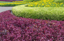 Colourful of landscape in beautiful garden flowers Royalty Free Stock Images