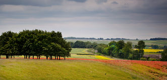 Colourful landscape. Colourful landscape image showing rolling countryside with splashes of red and yellow from poppies and oilseed rape Stock Images