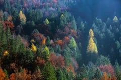 Colourful lasowi drzewa w jesieni Zdjęcia Royalty Free