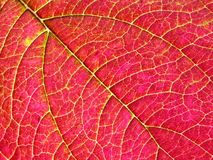 Colourful leaf Royalty Free Stock Photography