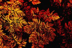 Colourful leaf background in red and gold. stock photo