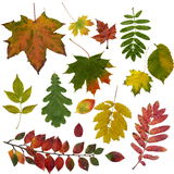 Colourful Leaf Collection Stock Photo