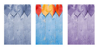 Colourful leafs on blue, wooden background. Triptych in blue,purple and nature colours Stock Images