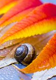Colourful leaves Royalty Free Stock Image