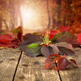Colourful leaves Royalty Free Stock Images
