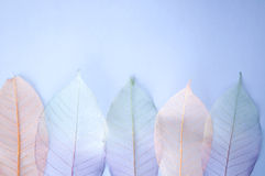 Colourful leaves background Stock Image