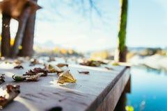Colourful leaves on a footbridge, autumn, copy space. Colourful leaves lying on a footbridge, blurry autumn scenery in the background footbdrige beautiful dock stock photos