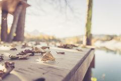 Colourful leaves on a footbridge, autumn, copy space. Colourful leaves lying on a footbridge, blurry autumn scenery in the background footbdrige beautiful dock royalty free stock image