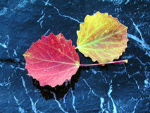 Colourful leaves isolated on stone. With water drops Royalty Free Stock Photography