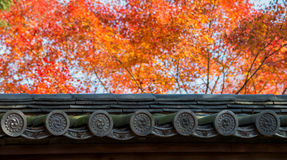 Colourful leaves of maple tree and Kyoto temple roof. Colourful leaves of maple tree and Kyoto temple roof, Japan Royalty Free Stock Photos