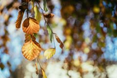 Colourful leaves in a park, autumn, copy space stock photo