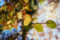 Colourful leaves in a park, autumn, copy space stock images