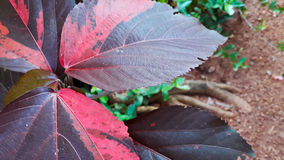 Colourful leaves Stock Photos