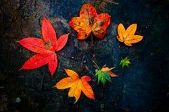 Colourful liście Zdjęcia Royalty Free