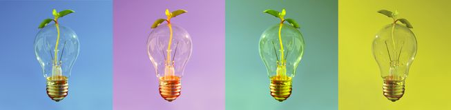 Banner with lightbulbs, Fresh idea for healthy and sustainable development, Shiny Lightbulb with small plant coming through. stock photo
