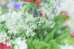 Colourful little flowers background. Nature blossom photo. Freshness decoration. Stock Photos