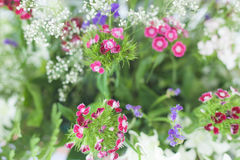 Colourful little flowers background. Nature blossom photo. Freshness decoration. Stock Photo