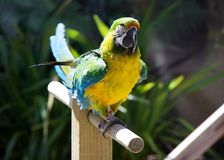 Colourful macaw parrot Stock Photo