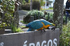 Colourful macaw parrot on wooden sign gets ready to fly away stock image