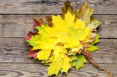 Colourful maple leaves Royalty Free Stock Photo