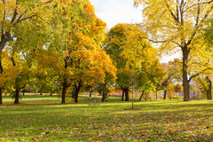 Colourful Maple Trees in Canada in the Fall Stock Photography