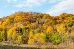 Colourful Maple Trees in Canada in the Fall Royalty Free Stock Photo