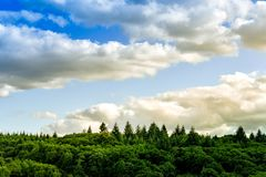 Colourful and Minimal landscape barckground. Sunsuet clouds and pines royalty free stock photos