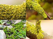 Colourful moss Stock Photo