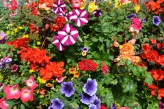 Brightly coloured summer flower plants in a window box royalty free stock images