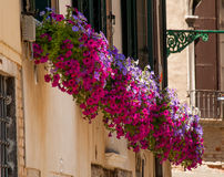 Colourful multicoloured flowers in window box Stock Photos