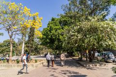 Urban nature at Huarez Park, Oaxaca. Colourful nature in February at Oaxaca, Mexico, in one of urban parks stock image