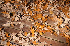 Colourful oak leaves on a deck Stock Photos