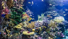 Colourful ocean aquarium. With motley fish, corals, plants and rocks stock images