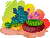 Colourful oceanic plants Stock Photos