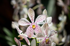 Colourful orchid flowers on bright Stock Photo