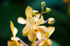 Colourful orchid flowers on bright Royalty Free Stock Photos