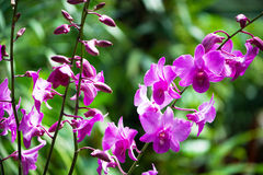 Colourful orchid flowers on bright Royalty Free Stock Image
