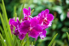 Colourful orchid flowers on bright summer day Stock Image