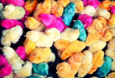 Colourful painted chicks Stock Photos