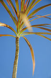 Colourful palmtree Royalty Free Stock Photos
