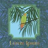 Colourful papuzi ptak w ramie ilustracja wektor