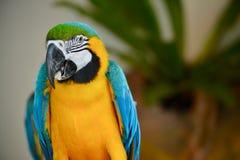 A colourful parakeet at KL bird park Stock Images