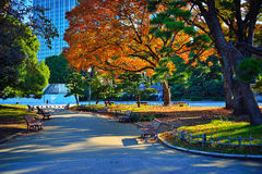Colourful park in the morning in Tokyo. Vibrant colours of autumn are unveiled. The coloured leaves of trees in the park by early morning light, very beautiful Royalty Free Stock Photo