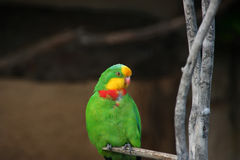Colourful Parrot. A colourful green, red, and yellow parrot Royalty Free Stock Photography
