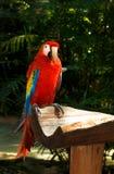 Colourful parrot Stock Photos