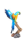 Colourful parrot Royalty Free Stock Photography